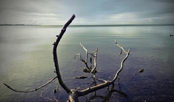 Antrim - N.Ireland - Lough Neagh