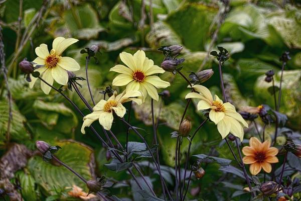 Hardy Plants Still In Bloom by RSK