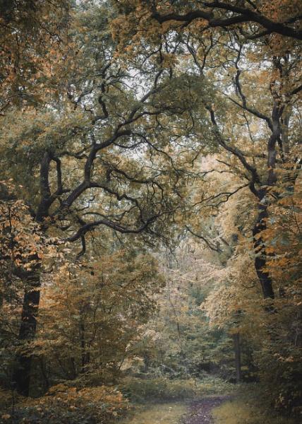 Woodland Scene by true