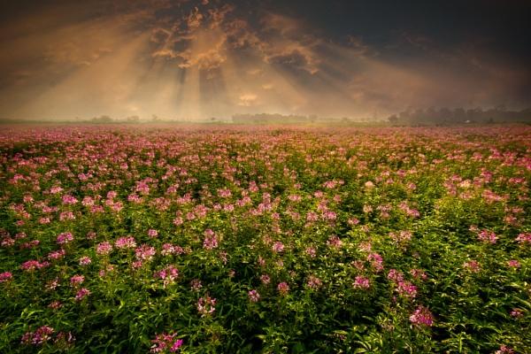 Wild Bloom by arindomb