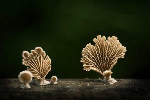Fungi by arindomb