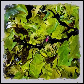 A leaf mozaic