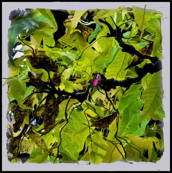 A leaf mozaic by derekp