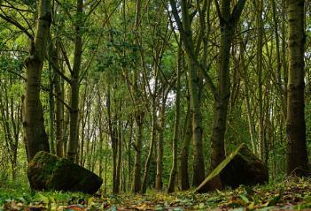 My woodland walk.