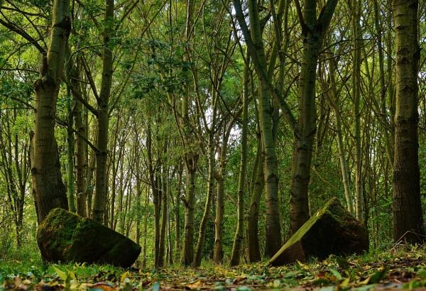 My woodland walk. by georgiepoolie