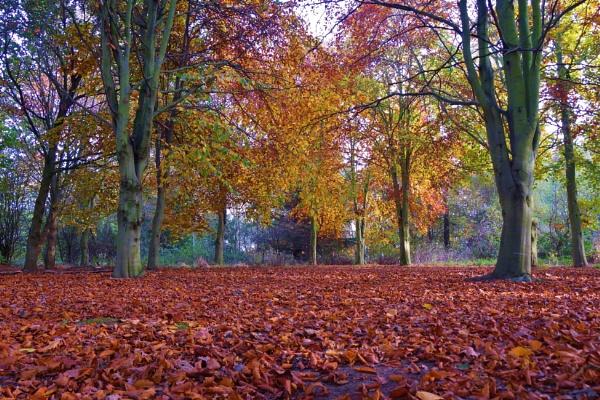 The Beauty of Autumn. by georgiepoolie