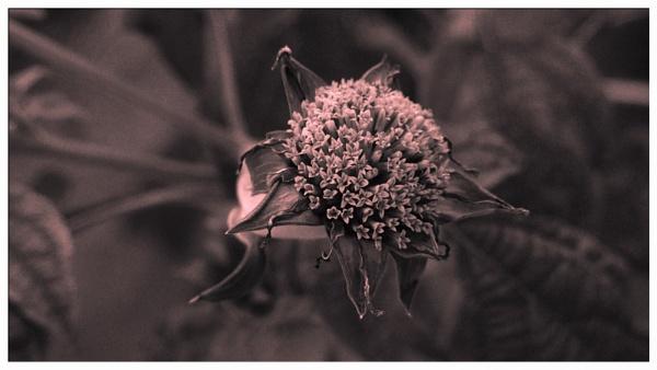 END OF SEASON. by kojack