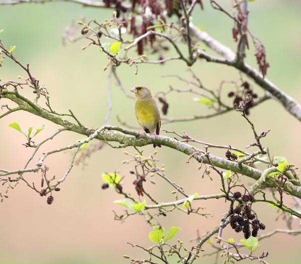 spring Green by Steveo28