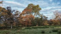 Autumn on the Pennines