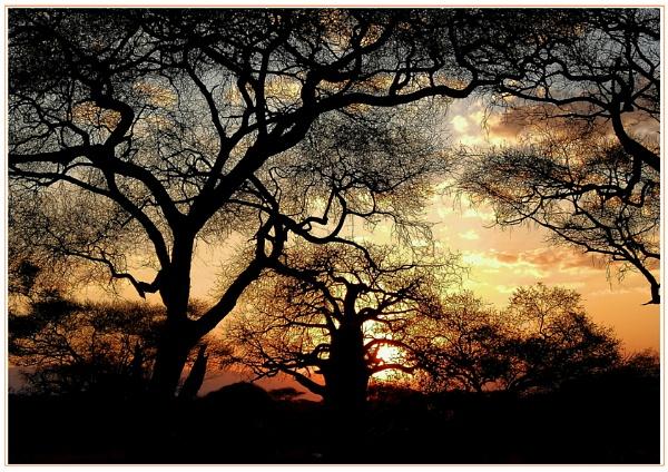 Baobab sunset by Howard2