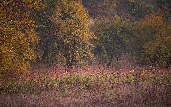 Autumn field by LaoCe