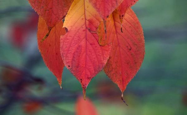 Autumn magic by LaoCe