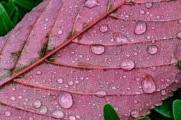 Photo : Autumn leaf after rain