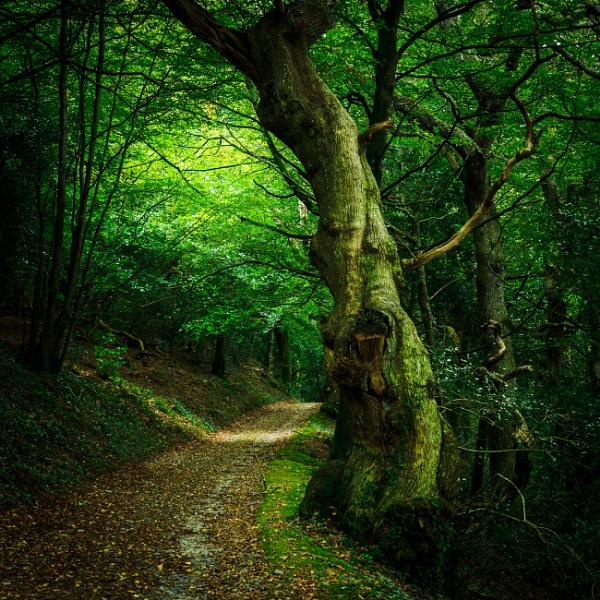 Woodland walk by goong