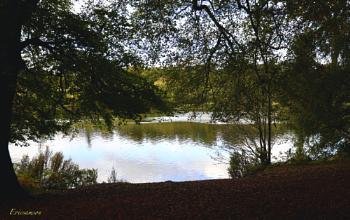 Clumber Park shade