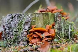 Mushrooms IV