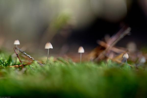 Mushrooms V by LotaLota