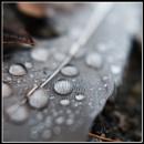 Wet feather by PhotoLinda