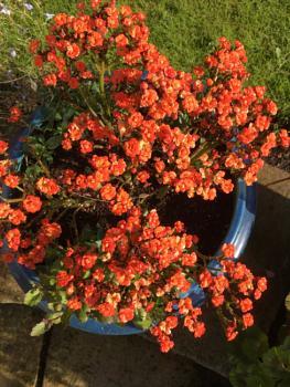 Flowerpot.