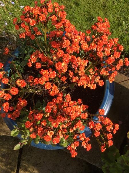 Flowerpot. by Pinarellopete