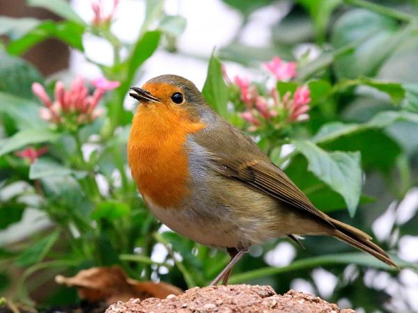 Robin by GPMASS