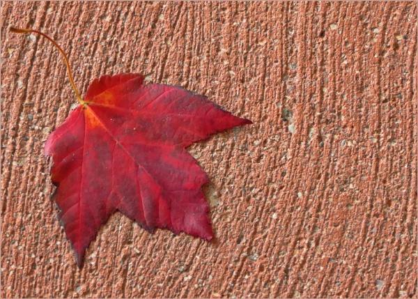 Autumn Solo by Joline