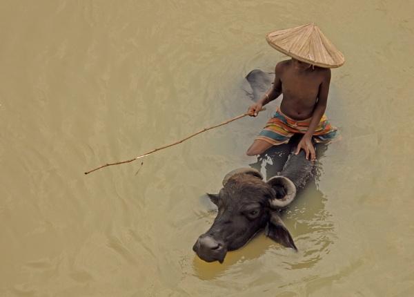 Fishing by Shibram