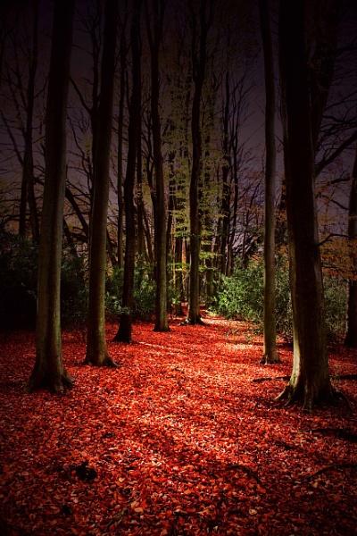 Autumn Carpet by Ian55