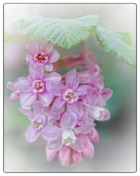 Pretty Pink by sweetpea62
