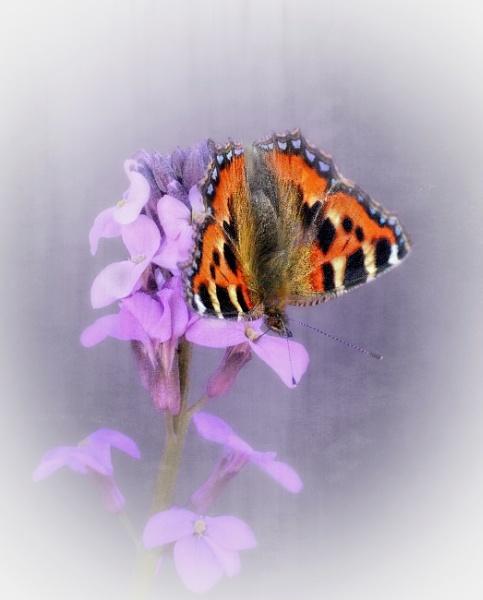 A delicate landing by sweetpea62