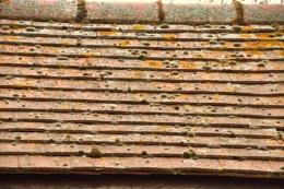 Roof tiles ...