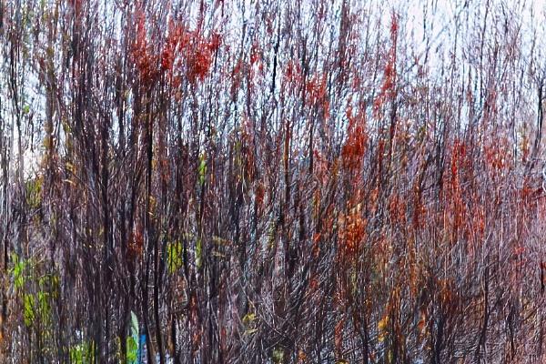 Autumn Colour by FrancisChiles