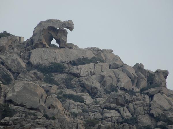 The Sardinian Bear by voyger1010