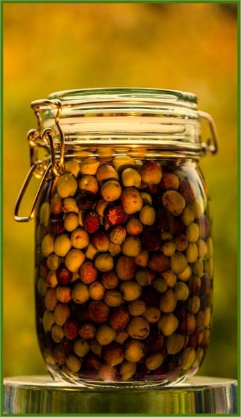 garden olives... by estonian