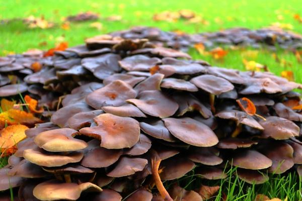 fungi by retroman