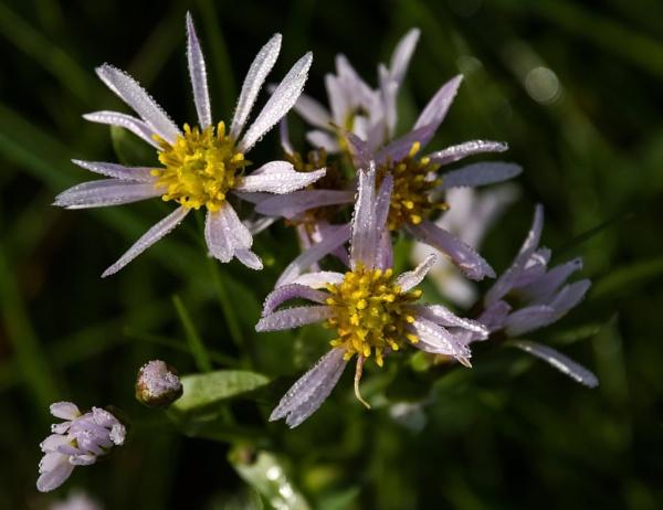 Dew on flowers by Madoldie