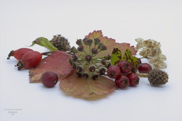 Autumnal Still Life - Macro by canoncarol