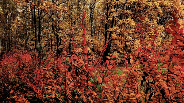 autumn in the woodland  (v.1 & v.2) by leo_nid