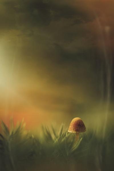 ...golden mushroom by KristinaZvinakeviciute