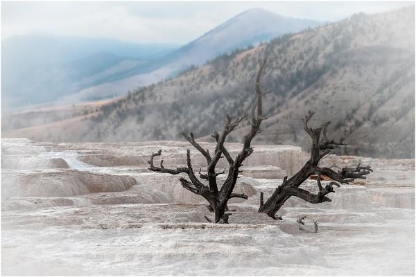 Dead Tree by dven