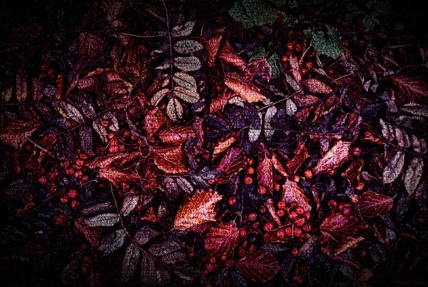 Leaves & Berries by adagio