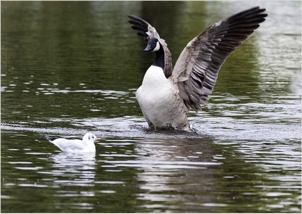 Goosey Goosey Gander by AnnetteK