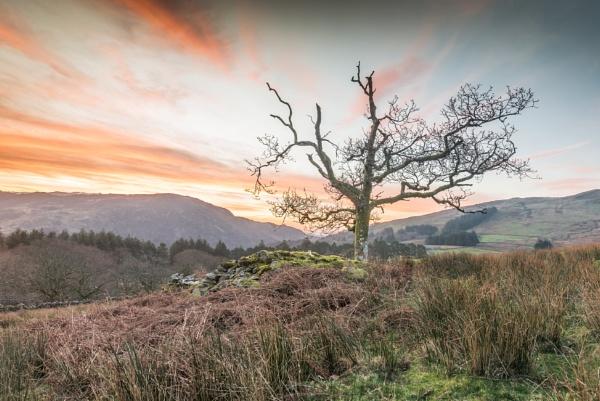 Sunrise tree by Barno123