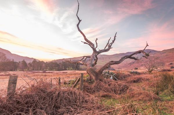 Dead tree sunrise by Barno123