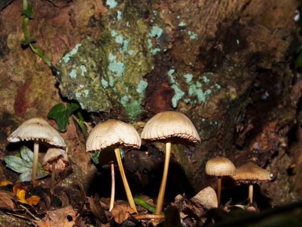 Fungi by roge21