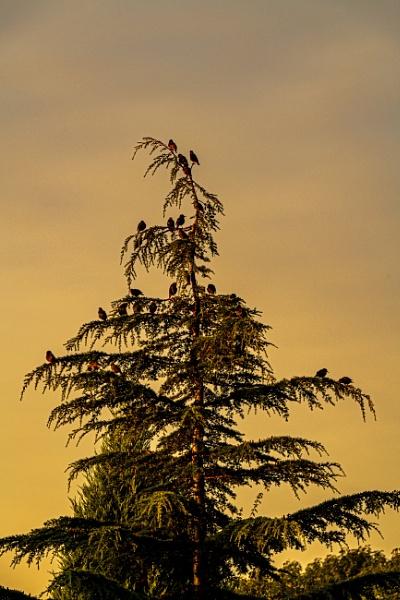 Birds in a Tree by mmart