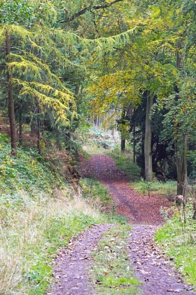 Wrekin Woodlands by LinH