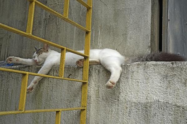 Sleeping Gatekeeper by prabhusinha