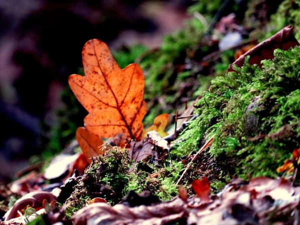 Leaf me Alone by SUE118