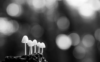 Fungi in Black and White